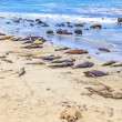 Sealions at the beach — Stock Photo #12453478