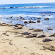 Sealions at the beach — Stock Photo #12453582