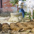 Woman at her farm with cow dung cakes and her cow walking around - Stock fotografie