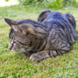 Cute cat relaxing in the garden - Stock Photo