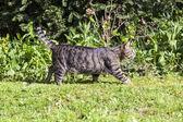 Cute cat relaxing in the garden — Stock Photo