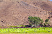Amerika'da payet balya hasata sonraki — Stok fotoğraf