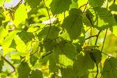 Listy stromu v detailu — Stock fotografie