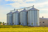 Silver silos in corn field — Stock Photo