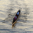 Stock Photo: Rowers training on the river