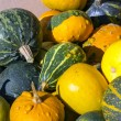 Colorful pumpkins collection on the market — Стоковая фотография