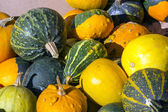 Colorful pumpkins collection on the market — Stockfoto