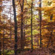 Beautiful forest in indian summer light in autumn — Photo