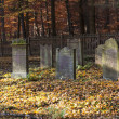 Old jewish cemetery in the oak forest — Stock Photo #13567738