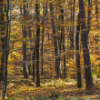 Foto Stock: Wild forest with trees in autumn