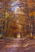 Beautiful forest in indian summer light in autumn — Stock Photo
