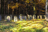 Old jewish cemetery in the oak forest — Stockfoto