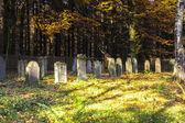 Alter jüdischer friedhof in dem eichenwald — Stockfoto