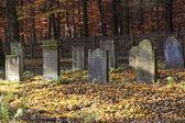 Antigo cemitério judaico na floresta de carvalho — Foto Stock