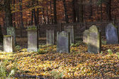 Old jewish cemetery in the oak forest — Stock Photo