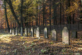 Old jewish cemetery in the oak forest — Стоковое фото