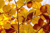 Piękne liście w babie lato lekkie jesienią — Zdjęcie stockowe