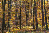 Wild forest with trees in autumn — Stock Photo