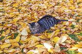 Gato paseando en el jardín con follaje — Foto de Stock