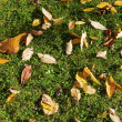 Pattern of foliage at the ground — Stock Photo #14063581