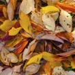 Pattern of leaves in indian summer colors — Stock Photo #14064018