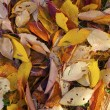 Pattern of leaves in indian summer colors — Stock Photo #14064026