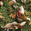 Pattern of foliage at the ground — Stock Photo #14064163