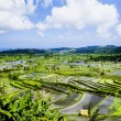Stock Photo: Rice terraces in Bali