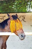 Portret van paard met oranje paard-versnelling — Stockfoto
