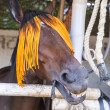 Portrait of horse with orange horse-gear — Stock Photo