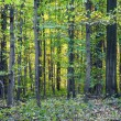 Harmonic pattern of oak trees in forest — Stock Photo #15336291