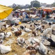 Goats for selling at the bazaar - Stock Photo
