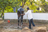 Boy cleaning the horse with water — Stock Photo
