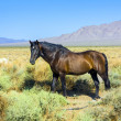 Wild horses in the prarie in the old  abandonned small village — Stock Photo