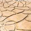 Dried and cracked mud in the near of a dried up creek — Stock Photo