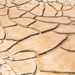 Dried and cracked mud in the near of a dried up creek — Stock Photo #16632147