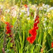 Stock Photo: Beautiful flowers in the meadow