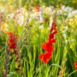 Beautiful flowers in the meadow  — Lizenzfreies Foto
