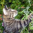 Cat is hunting in the garden — Stockfoto