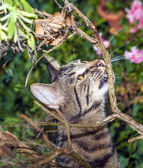 Cat is hunting in the garden — Stock Photo