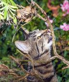 Gato está cazando en el jardín — Foto de Stock