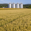Four silver silos in corn field — Foto Stock