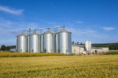 Four silver silos in corn field — Stock Photo