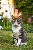 Cute cat in the garden — Stock Photo