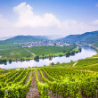 Stock Photo: Famous Moselle Sinuosity with vineyards