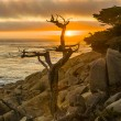 Romantic sunrise near Point Lobos with old dried trees at the st - Stock Photo