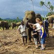 Children hug with elephants in the jungle camp - Stock Photo