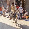 Donkey rider transports goods at Chhawri Bazar — Stock Photo