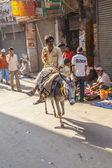 Donkey rider transports goods at Chhawri Bazar — Stock Photo