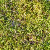 Grüne moos-hintergrund — Stockfoto